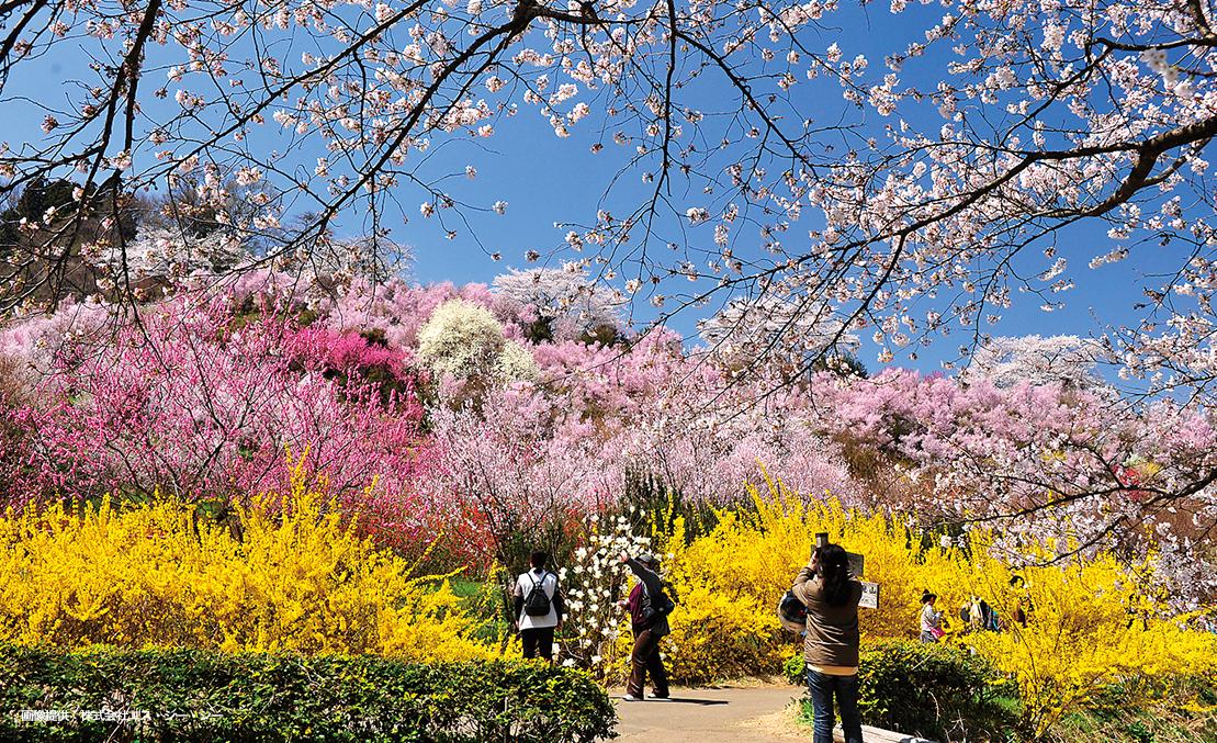 花見山公園 福島県